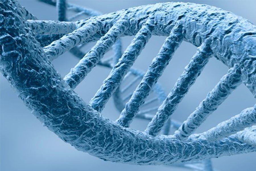 Адам гені  жауын құртының генінен 2 есе аз