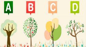 Психологиялық тест: Қай ағашты таңдайсыз?