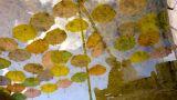 Нағыз махаббат – бәріне бұйыра бермейтін бақ
