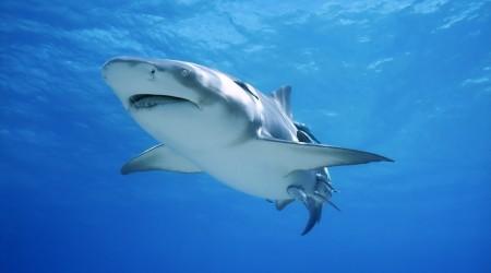 Көктен құлап түскен акула тірі қалды
