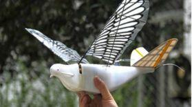 Қытайлық инженерлер көгершіннен аумайтын дрон жасап шығарды