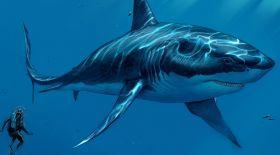 Мегалодон – әлемдегі ең үлкен акула