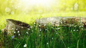 Демалыс күндері ауа райы қандай болады?