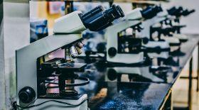 Генетика тарихы: Тұқымқуалаушылық қалай анықталды?