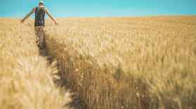 Агроөнеркәсіп бойынша Қазақстандағы жетекші өңір – Қостанай облысы