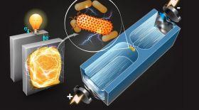 Бактериялардан электр энергиясын өндірудің оңай жолы табылды