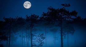 Фотограф көзімен: Финляндия орманындағы ғажайыптар