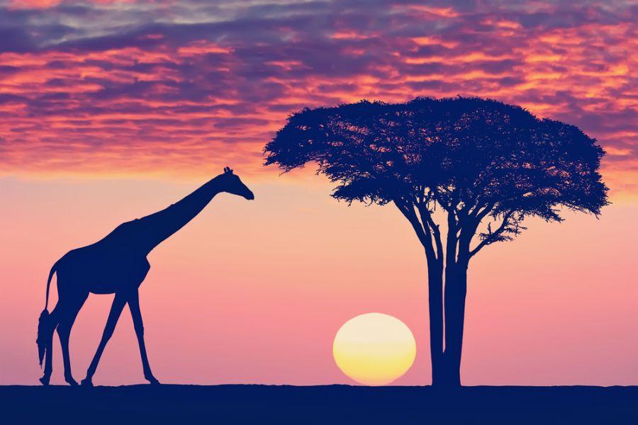 Танзания тылсымы туралы