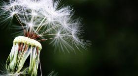 Көктемгі аллергия туралы не білуіміз керек?