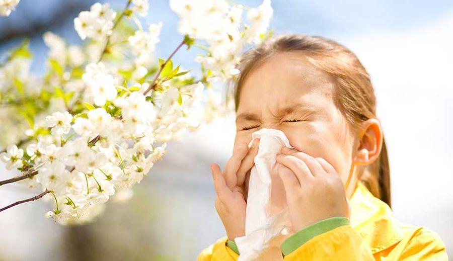 Поллиноз: маусымдық аллергиямен қалай күресуге болады?