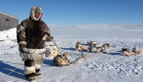 Эскимостардың қасқыр аулау тәсілі