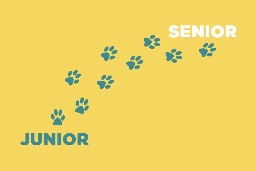 Junior мен senior сөздері қай уақытта қолданылады?