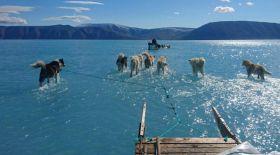Гренландия ери бастады. Бұл бүкіл ғаламшар үшін апатты жағдай ма?