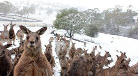 35 жылда алғаш рет: Аустралияның оңтүстік-шығысына қар жауды