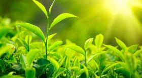 Фотосинтез: Жер бетінде жасыл өсімдіктердің пайда болуы