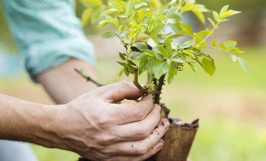 Алматыда 1 миллион ағаш отырғызылады