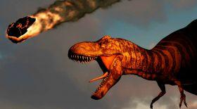 Динозаврлар жойылуының себебі астероид емес