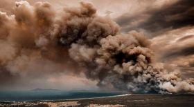 Экологтар Аустралиядағы өрттен 1,25 миллиард жануар қырылғанын анықтады
