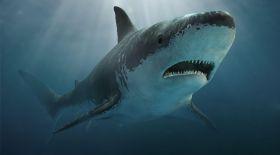 Осыдан 340 млн жыл бұрын өмір сүрген акуланың қаңқасы табылды
