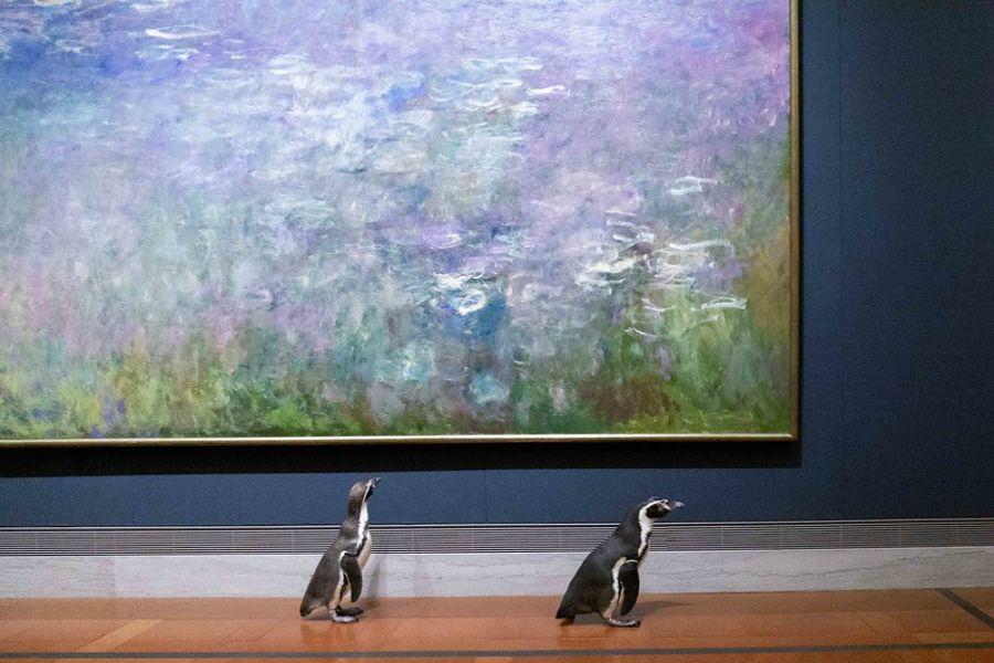 Музей аралаған пингвиндер