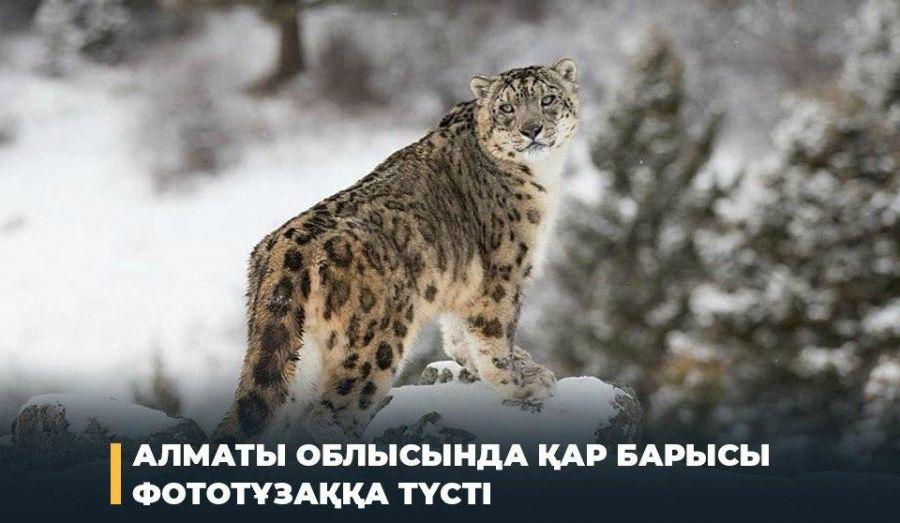 Алматы облысында қар барысы фототұзаққа түсті