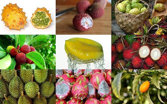 Сіз естімеген 10 экзотикалық жеміс