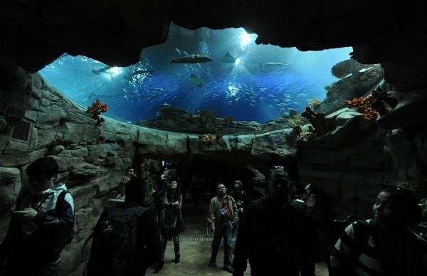 Акулаға толы аквариум сынып кетті