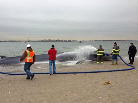 Нью-Йоркті дүрліктірген кит жан тапсырды