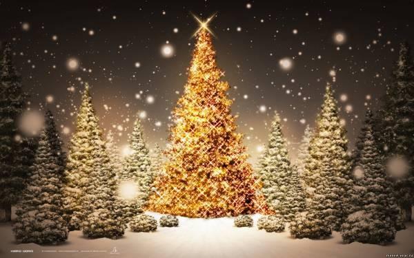 Жаңа жылдық ең әдемі шыршалар