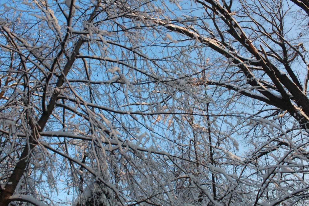 Алматыдағы қыс патшалығы