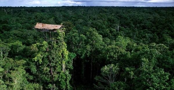 Жаңа Гвинеядағы