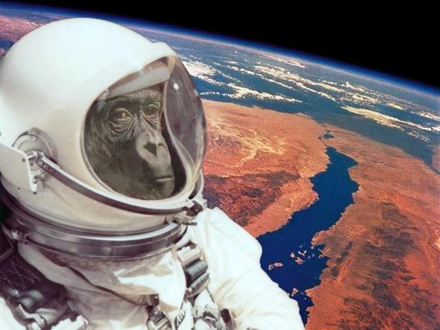 Ирандық маймыл ғарышқа аттанды