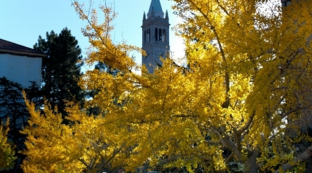 Калифорния университеті