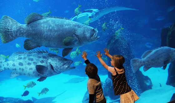 Ең ерекше аквариумдер