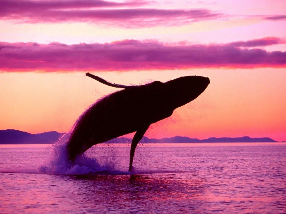 19 ақпан - халықаралық теңіз сүтқоректілерін қорғау күні