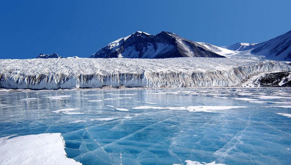 Антарктидадан жаңа тіршілік иесі табылды