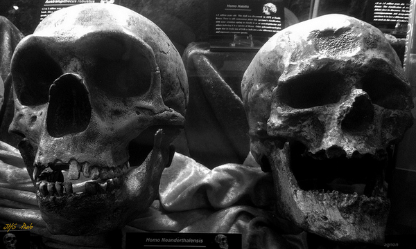 Неандерталдықтарды өлтірген - көздері