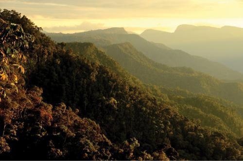 Перу тауларынан кесірткенің жаңа екі түрі табылды