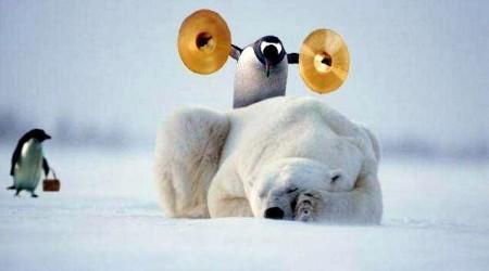 Калифорнияның пингвиндері iPad-тағы ойындарға құмар