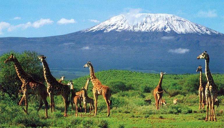 Ақ қалпақты Килиманджаро
